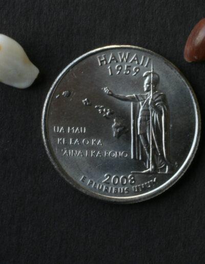 'ālīlea and pōleho shells