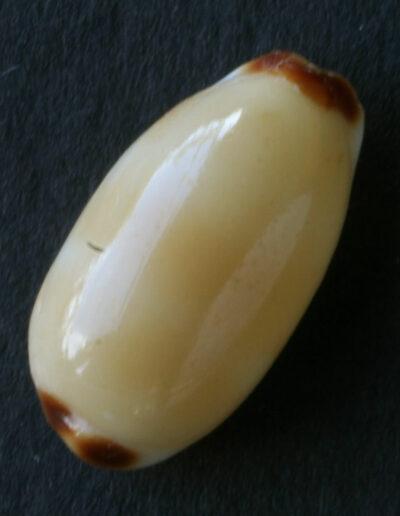 pōleholeho lenalena
